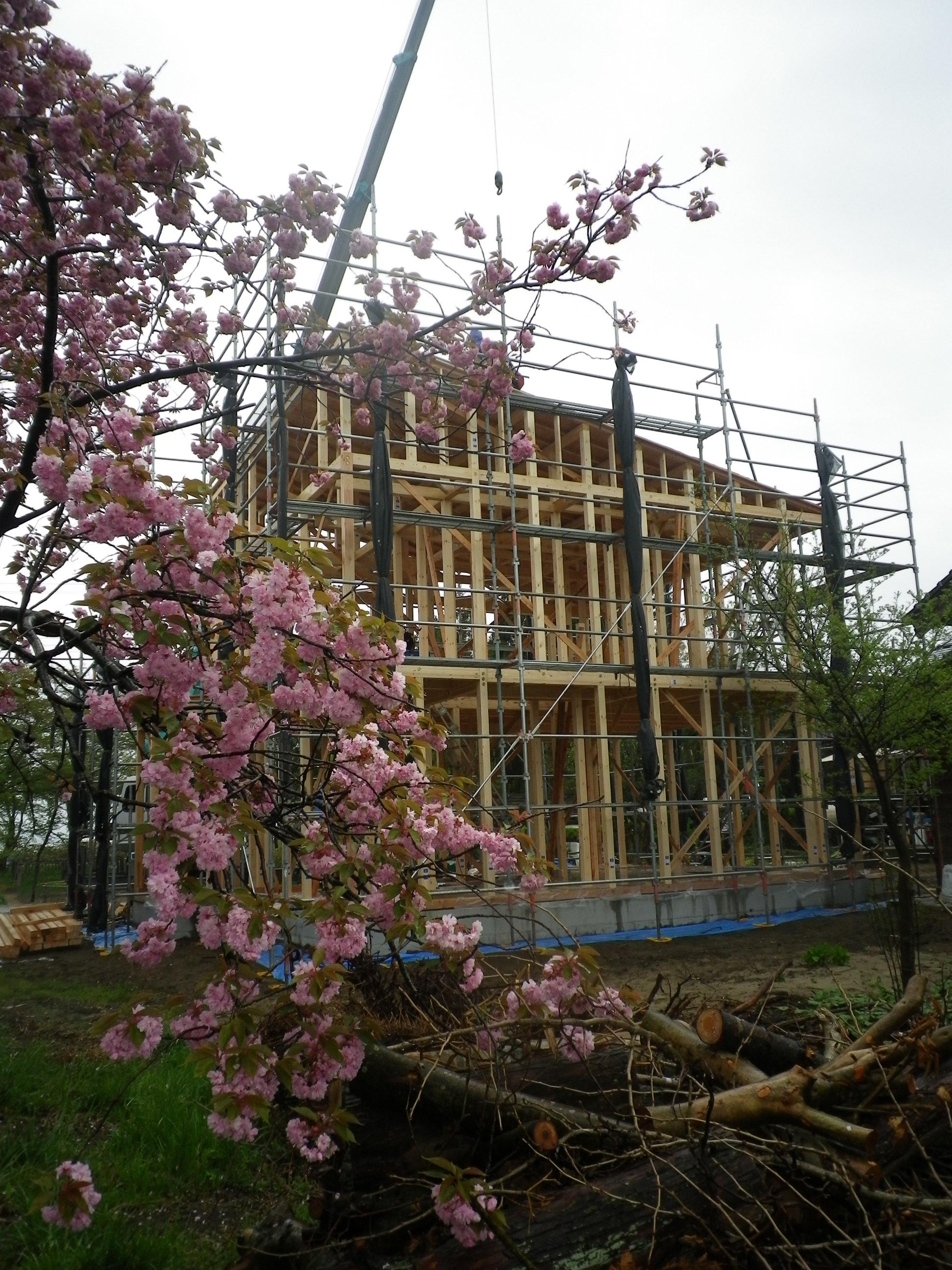 八重桜の時期