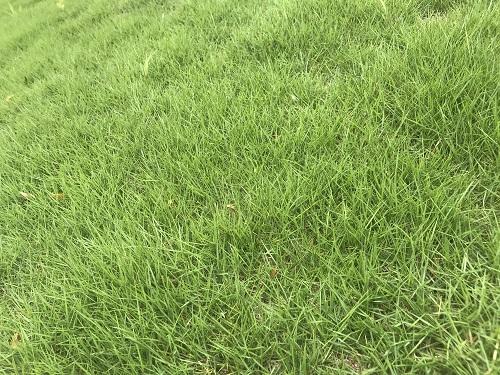 芝とROMO