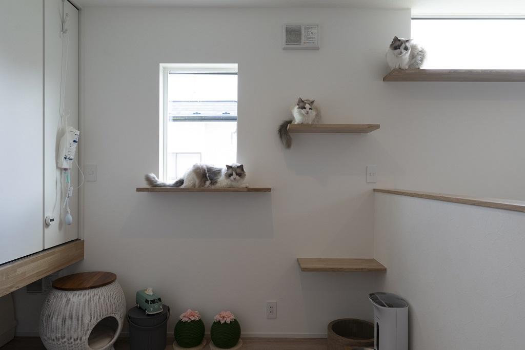 ペット共生住宅